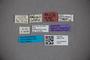 3047775 Stenus humeralis ST labels2 IN