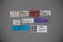 3047775 Stenus humeralis ST labels IN