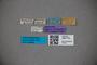 3047778 Stenus fossipennis ST labels IN