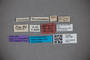 3047782 Stenus freyi ST labels2 IN
