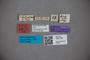 3047783 Stenus friebi ST labels2 IN