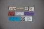 3047783 Stenus friebi ST labels IN