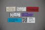 3047786 Stenus fulgurator HT labels IN