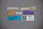 3047793_Stenus gerardi Bernhauer 1932-86 ST labels IN