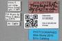 3130352 Trentepohlia dybasiana HT labels IN