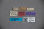 3047797 Stenus gigas HT labels2 IN
