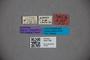 3047798 Stenus glaber ST labels2 IN
