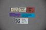 3047798 Stenus glaber ST labels IN