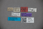 3047799 Stenus glaucinus ST labels2 IN