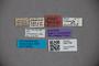 3047799 Stenus glaucinus ST labels IN