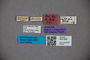 3047800 Stenus graecus ST labels2 IN