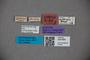 3047800 Stenus graecus ST labels IN
