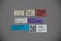 3047802 Stenus lacertosus ST labels2 IN