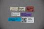 3047802 Stenus lacertosus ST labels IN